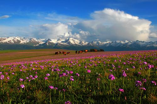 新疆伊犁旅游那拉提风景区夏牧场美景照片