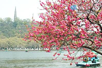 赏桃花,杨柳间株桃是西湖春天景致的最佳写照,犹以白堤和苏堤景色最佳