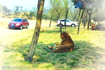 北京八达岭野生动物园!