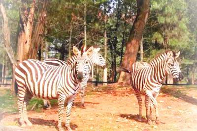 长沙生态动物园*